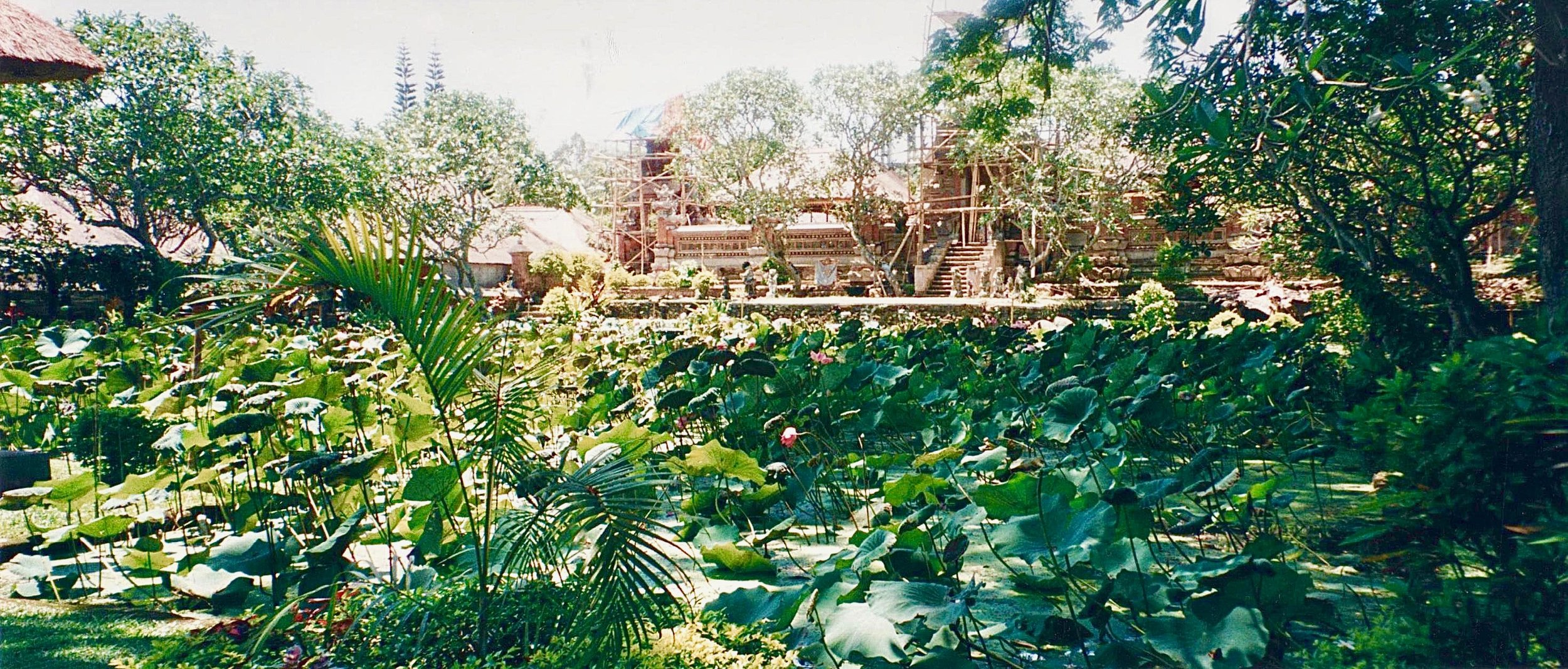 Bali Ubud lily pond 2.jpg