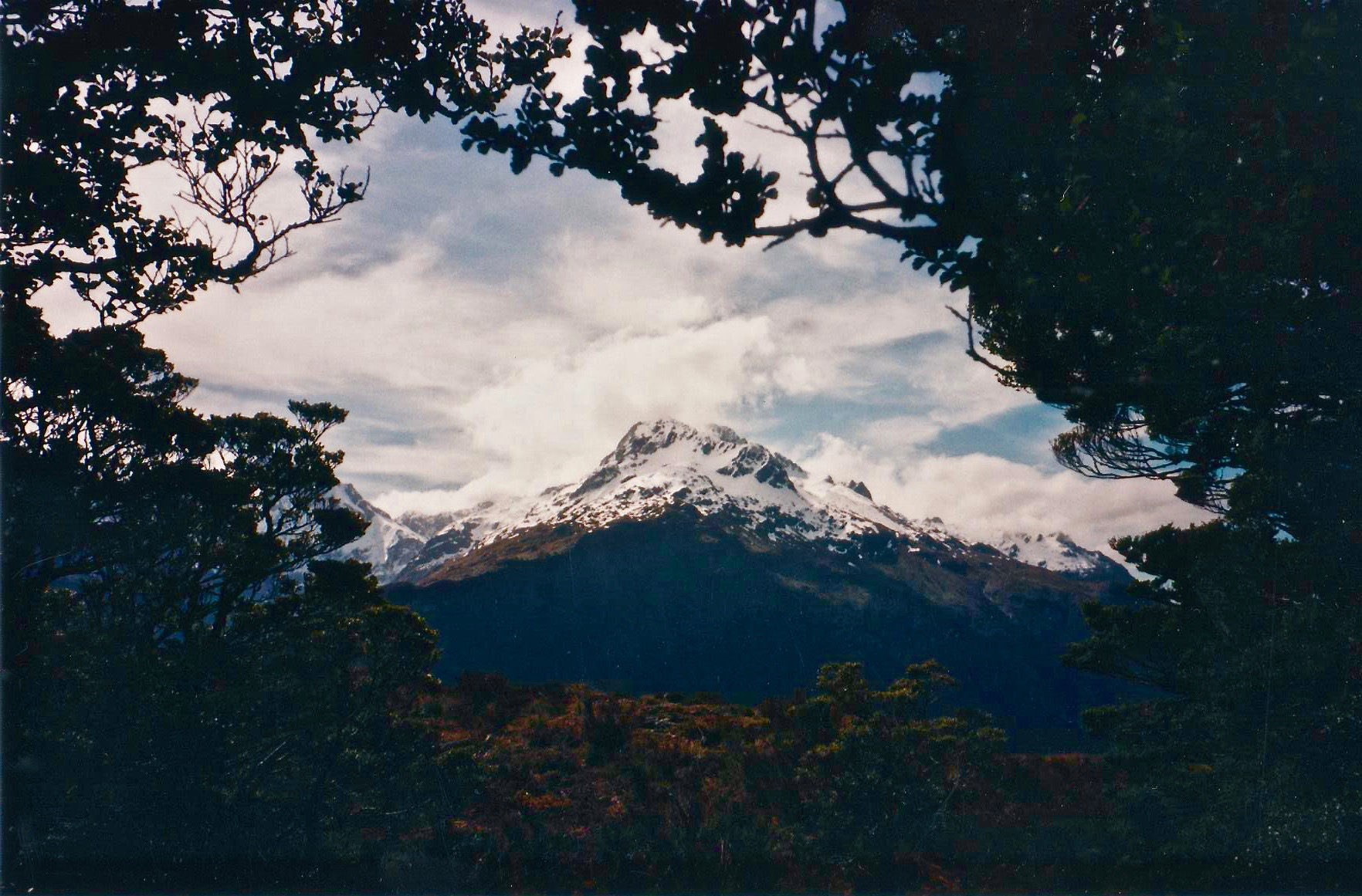mountain through the trees New Zealand