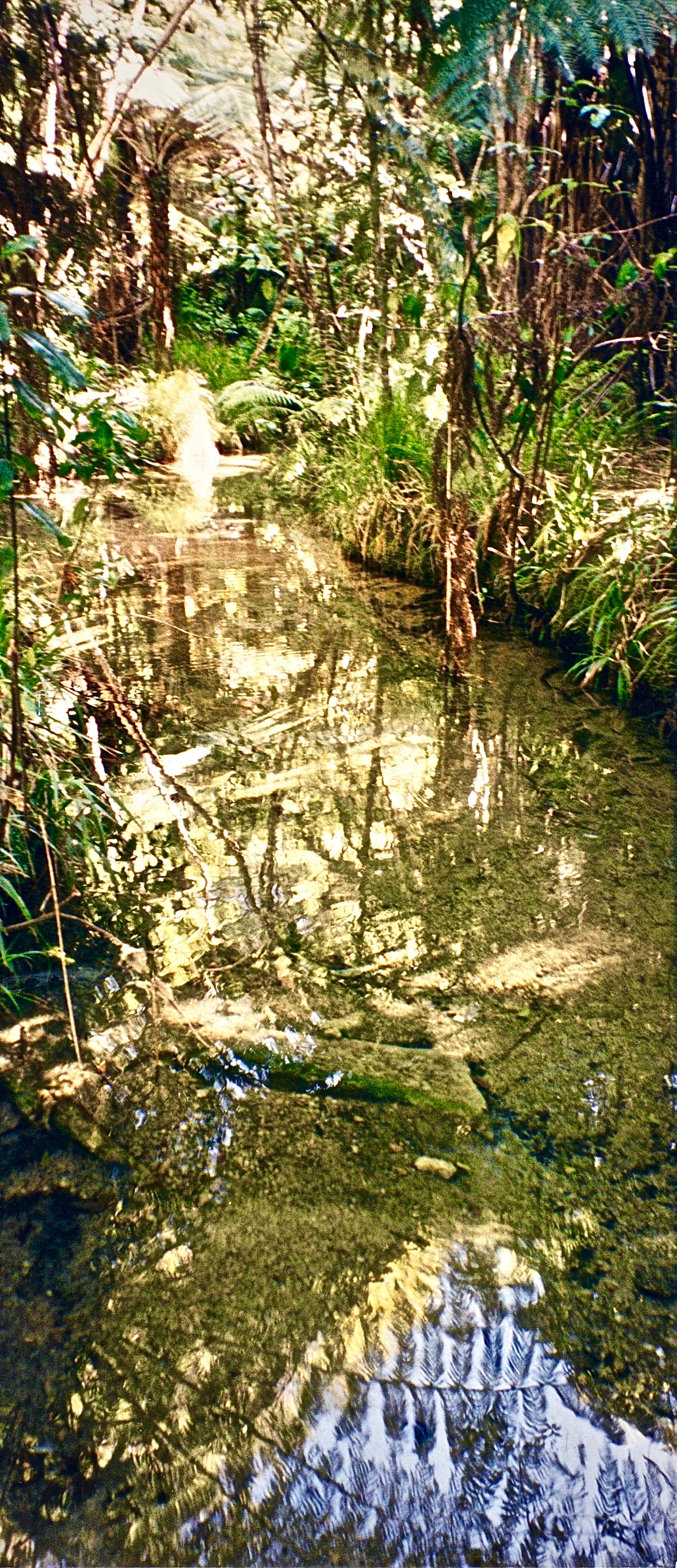 NZ Abel Tasmin NP glass stream 2.jpg