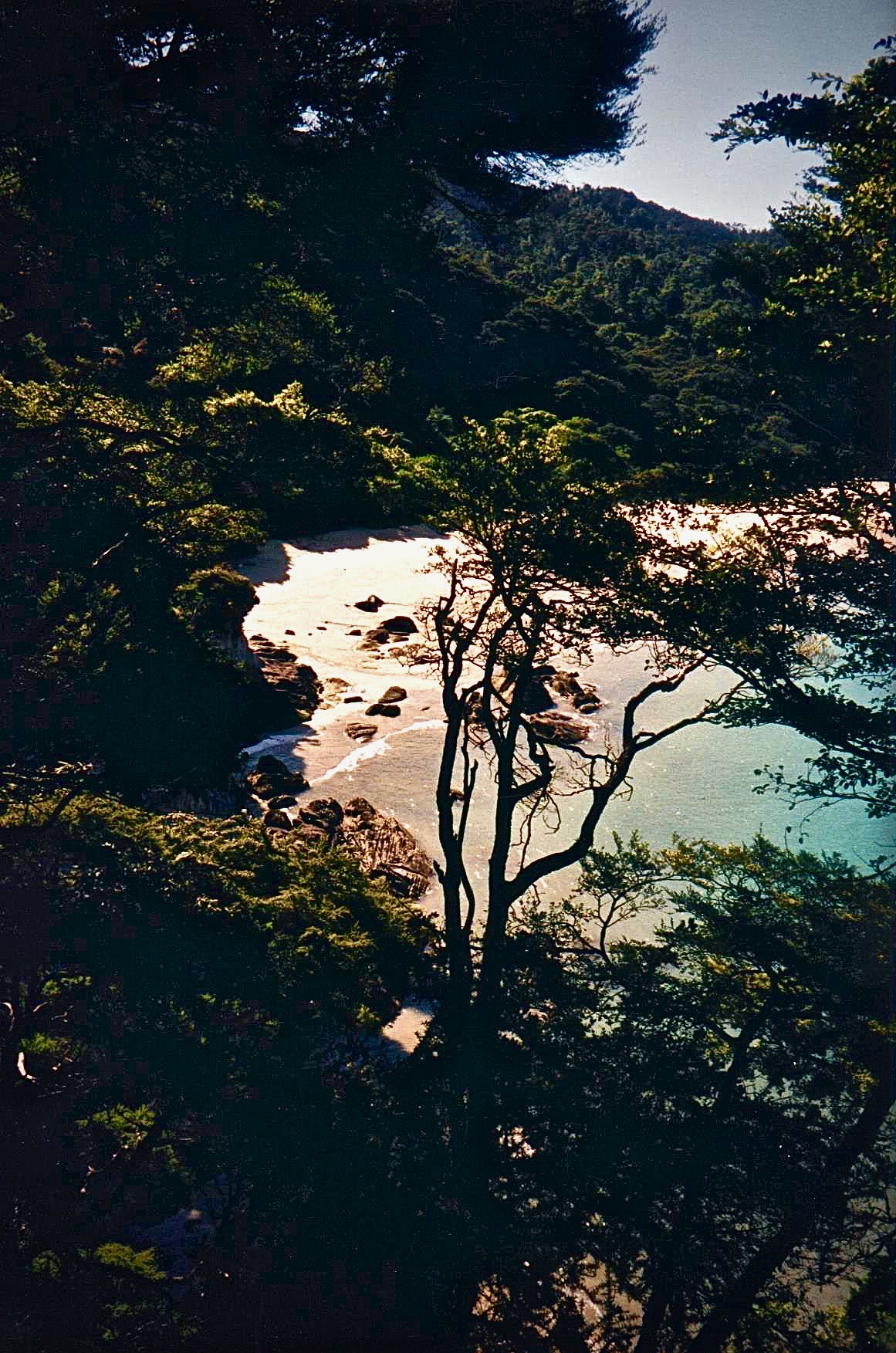 NZ abel tasmin thru trees gorgeous smaller.jpg