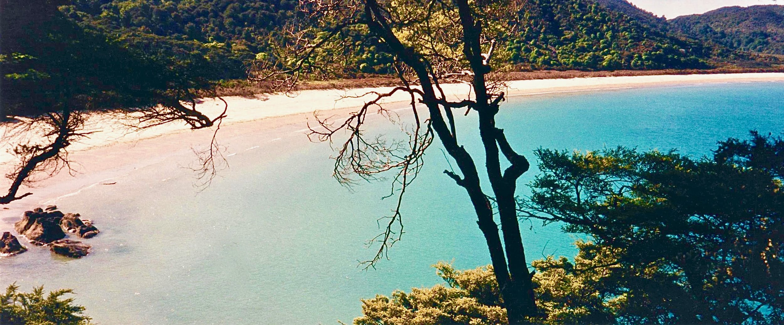 NZ Abel Tasmin trek beach thru trees 2.jpg