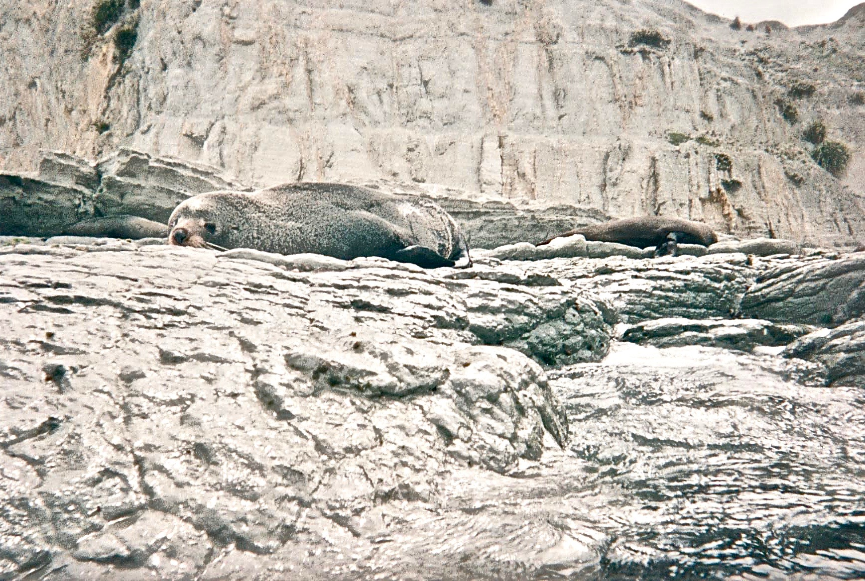 NZ snorkeling seals.jpg