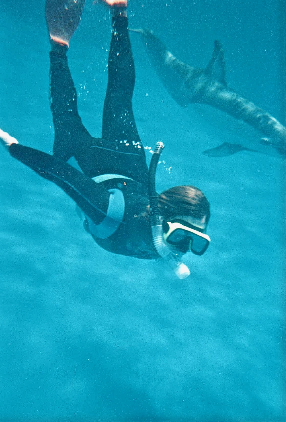 NZ lula swimming with dolphin.jpg