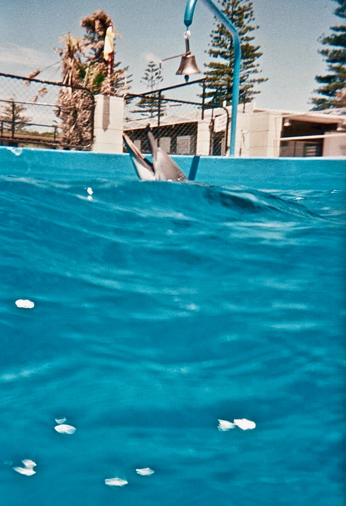 NZ swimming with dolphins water pov.jpg