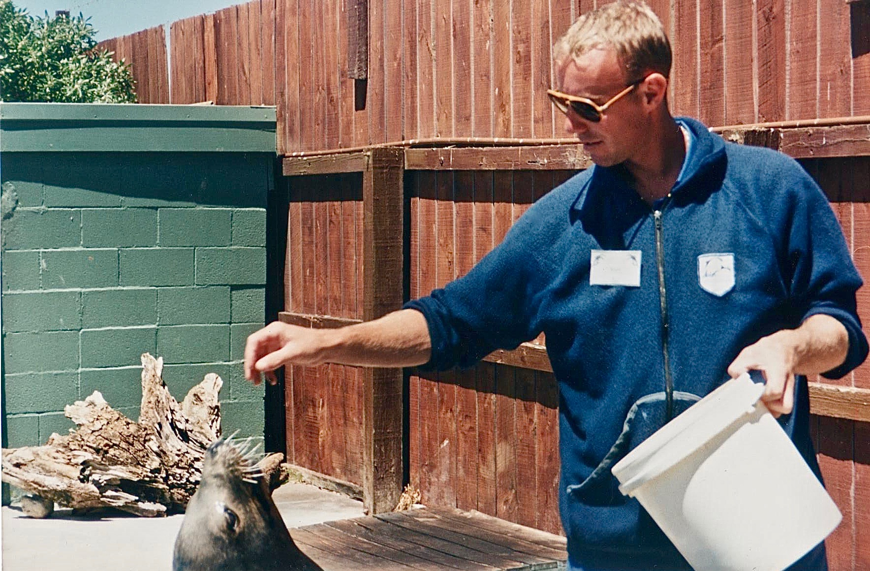 NZ seal feeding.jpg