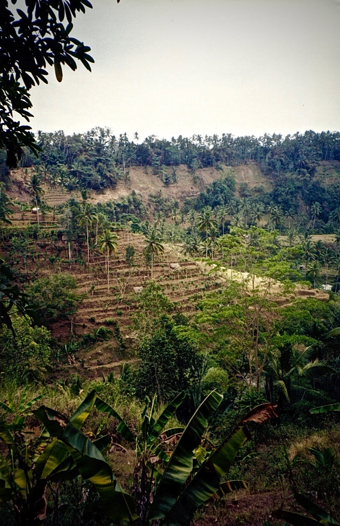 Rice paddies on the road to Ubud, Bali, Indonesia