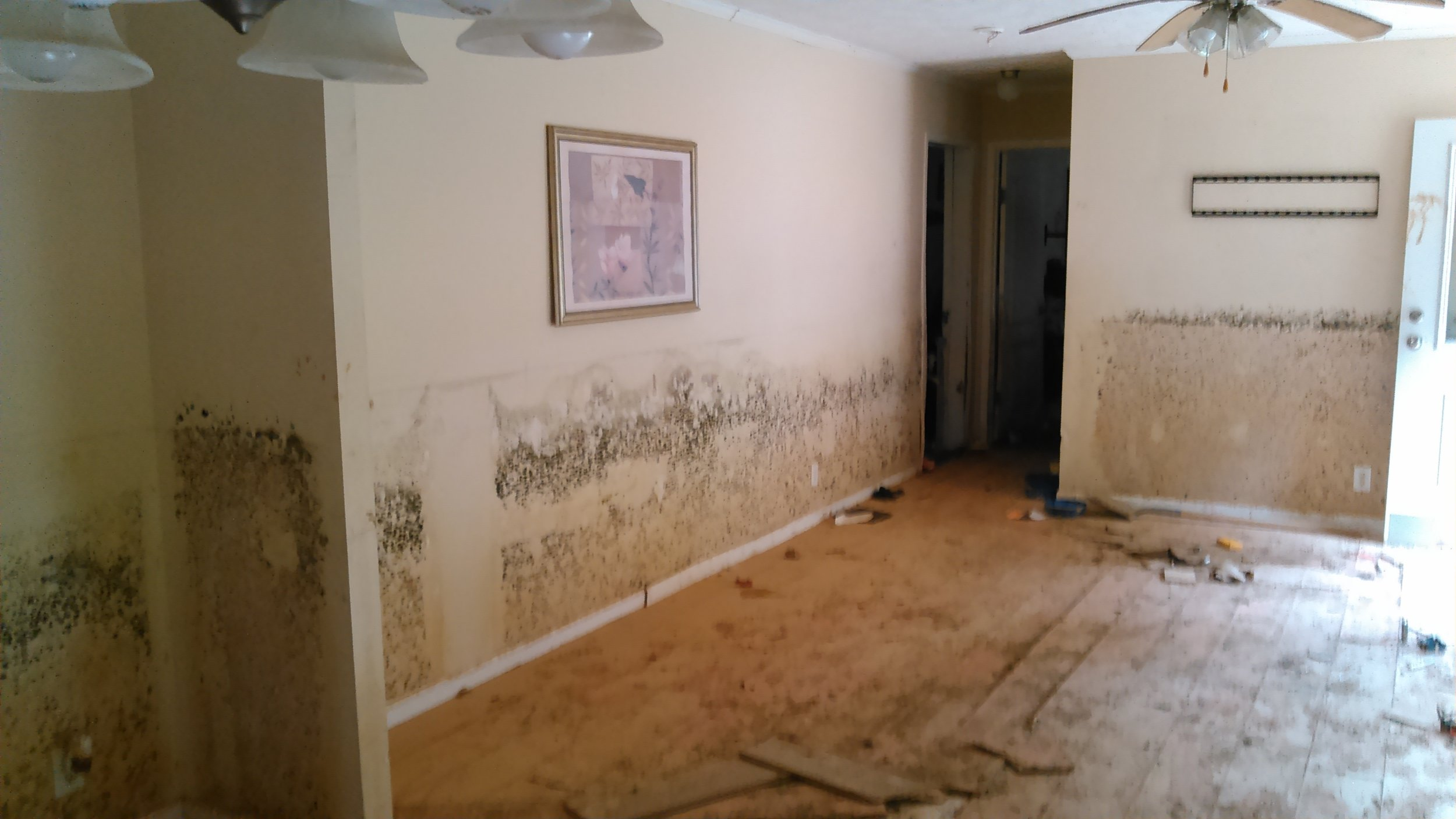 This shows the typical mold growth we encountered in many of the homes we cleaned out.