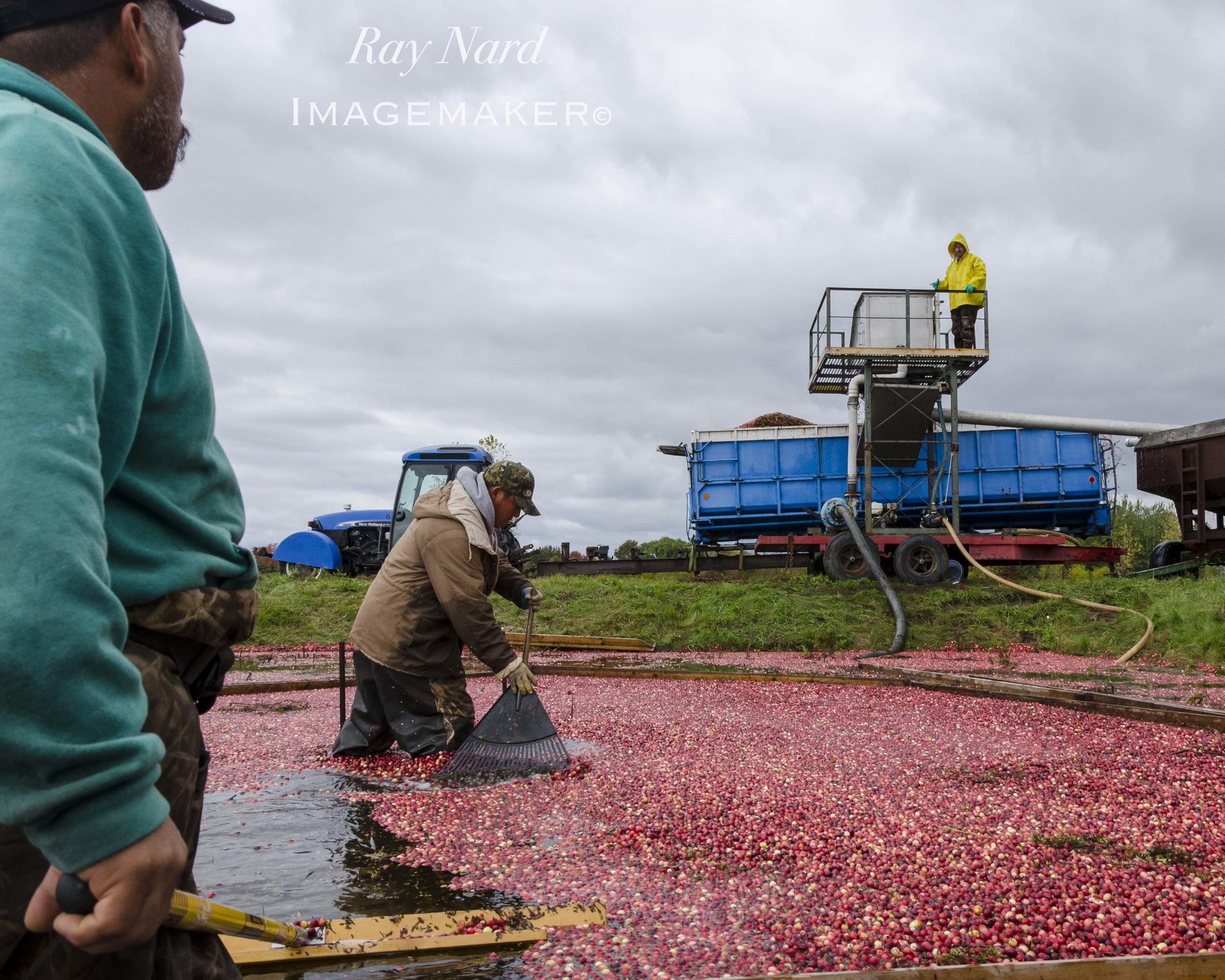 A Farm Life Doc_7.JPG
