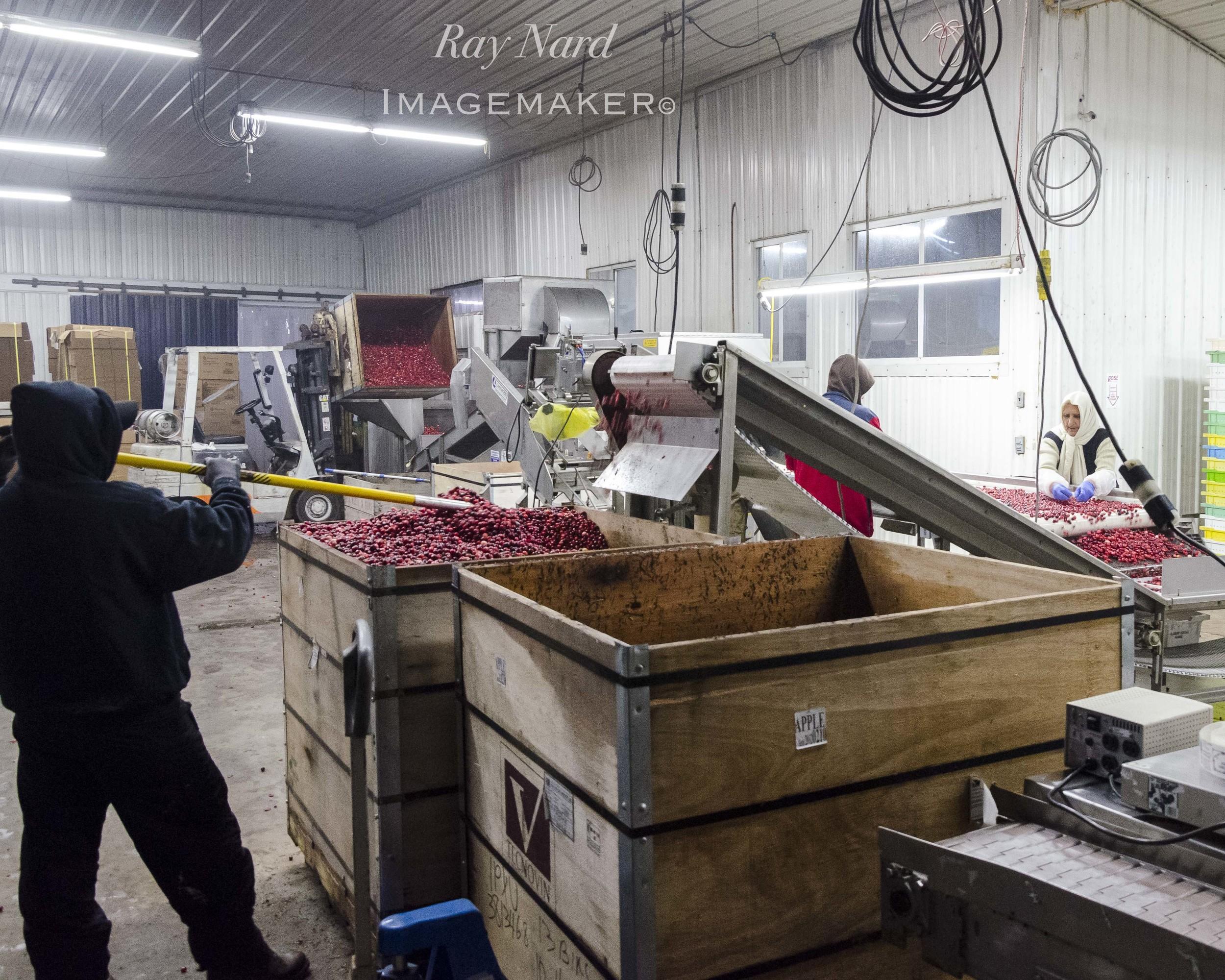 A Farm Life Doc_19.JPG