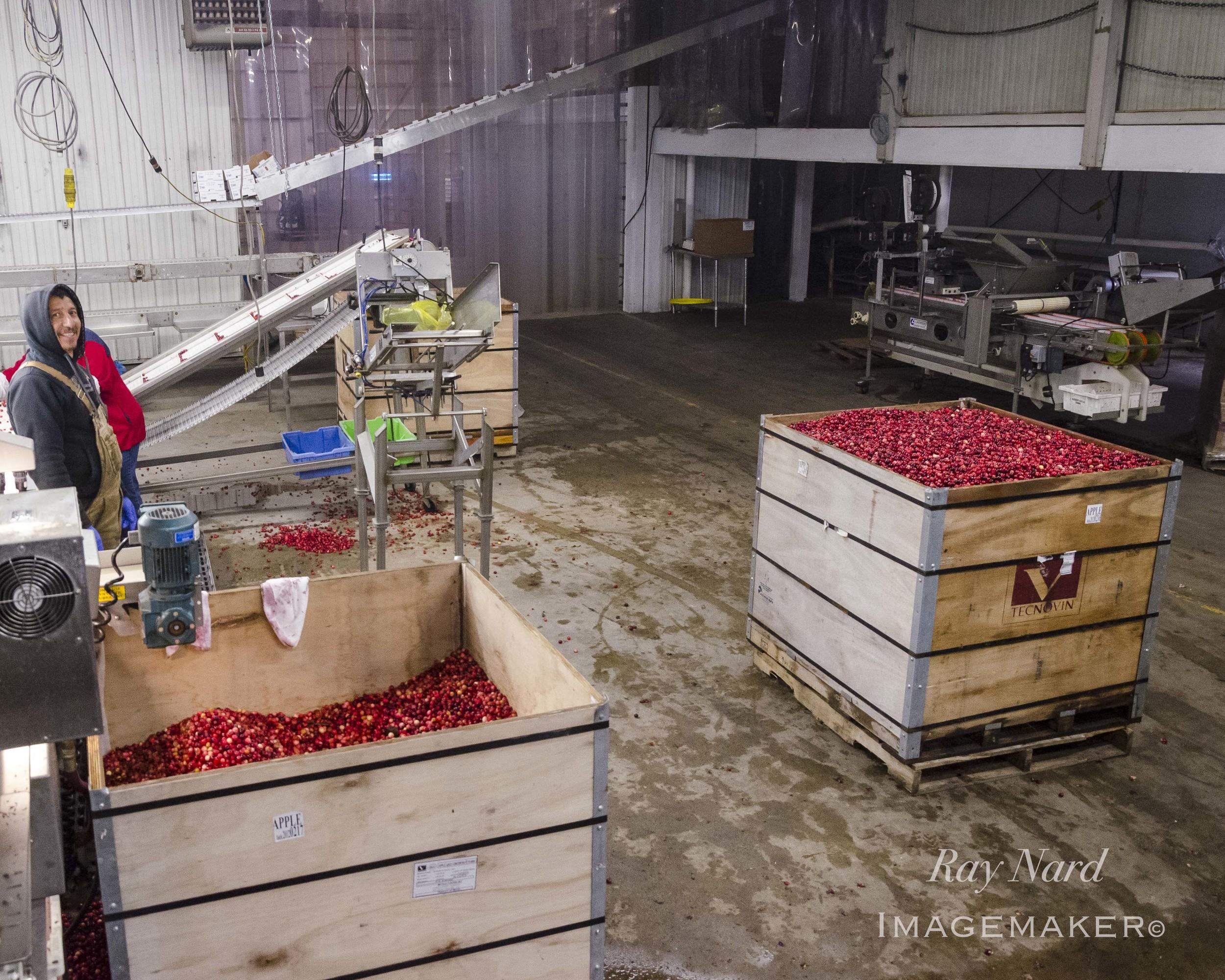 A Farm Life Doc_20.JPG
