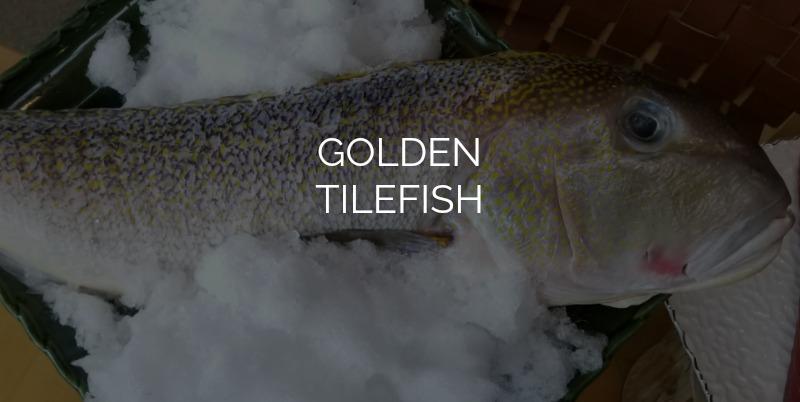 TILEFISH.jpg