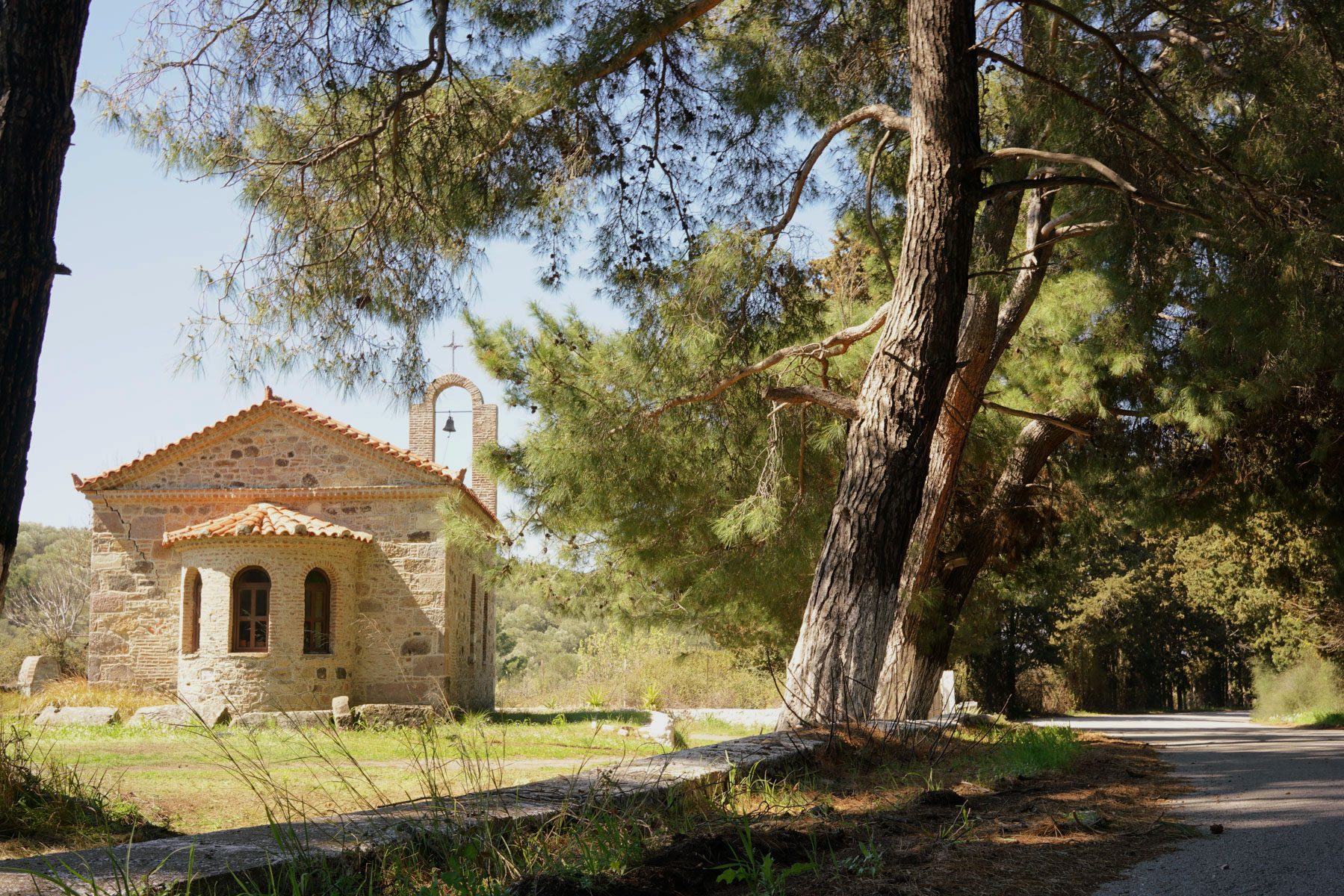 Church in ancient pine forest.