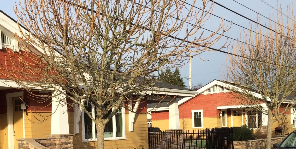 Backyard Cottage in Jefferson Westside