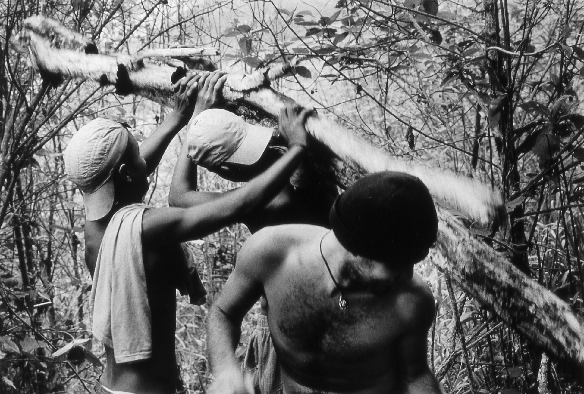 Gathering wood. Espirito Santo, Brazil.