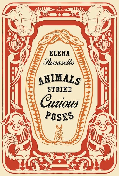 animalsstrikecuriousposes.jpg