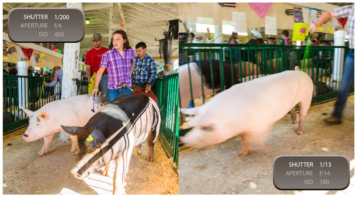 SHUTTER SPEED: A slow shutter speed is generally frowned upon when taking photos in dark environments. The picture on the left is crisp and clear because of a faster shutter speed. The photo to the right had a slower shutter speed so the pig's motion was caught in the shot as it zipped by.