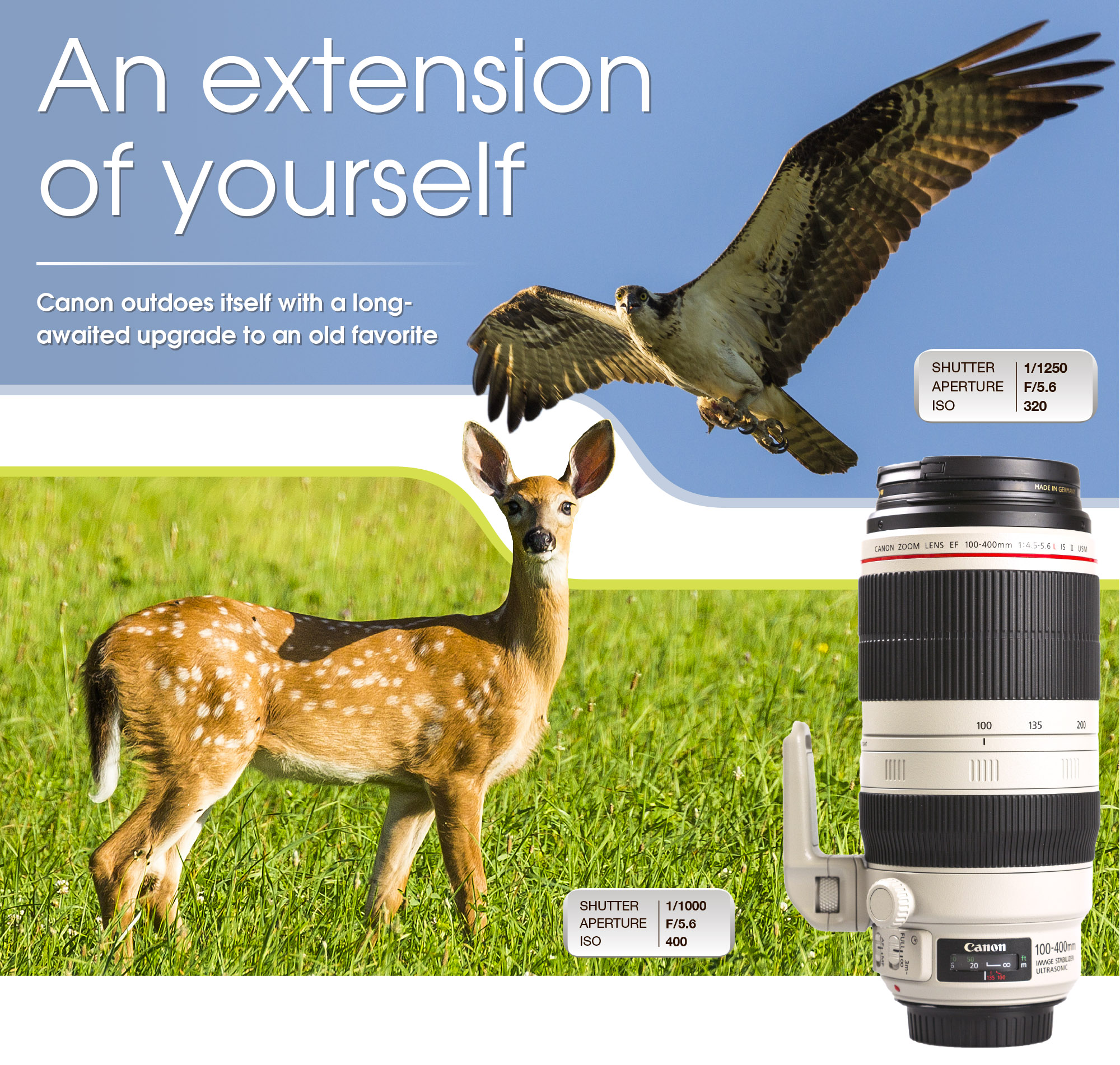 UPGRADED: Canon's new 100-400mm f4.5-5.6 L IS USM II is a brilliant lens and the value of this piece of equipment is highly valuable to wildlife, sports and event photographers. The advances in camera technology incorporated into this new lens make it a far better performer than its predecessor.