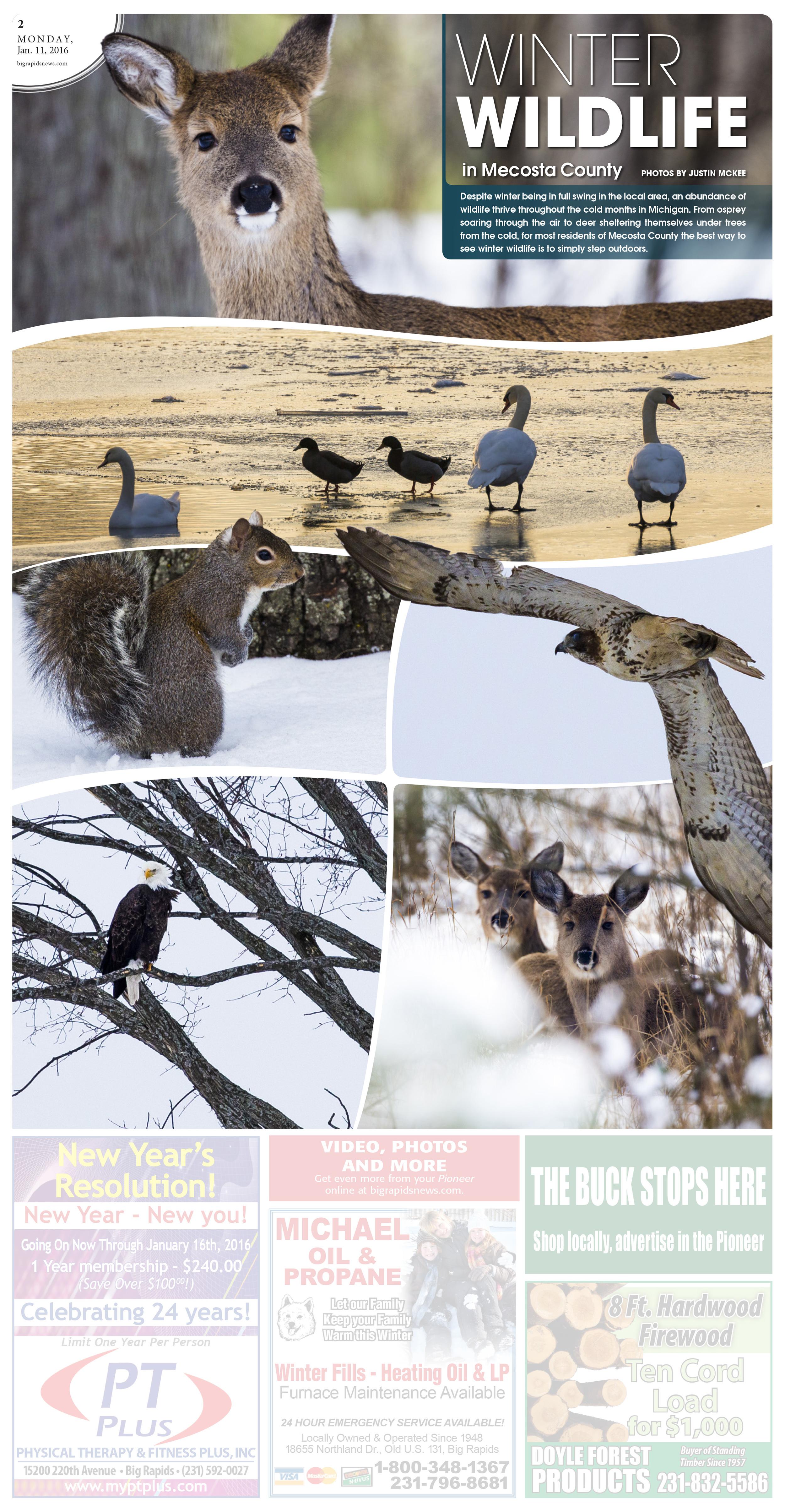 Winter Wildlife in Mecosta County