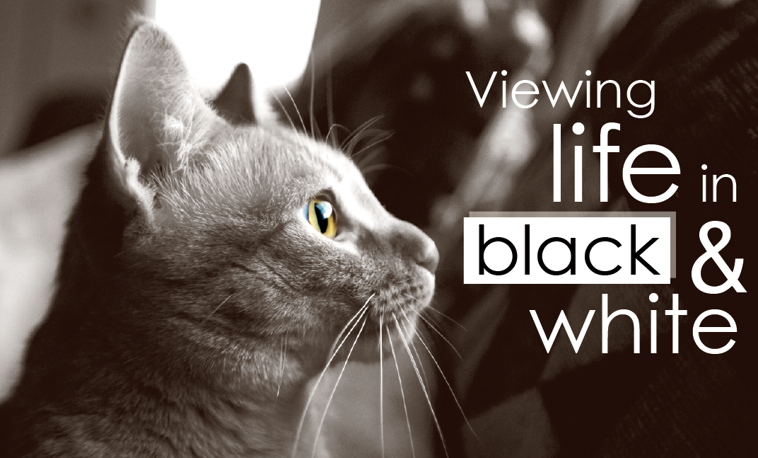 MEET JETT: Jett the cat has been featured here on my column before and he's grown a lot. I chose to make this image black and white because the image has a lot of contrast in it.