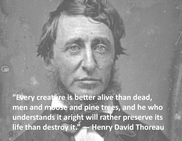 Quote Of The Day Henry David Thoreau Thomas Kelleher