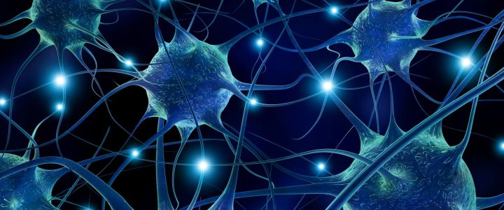 synaptic connections