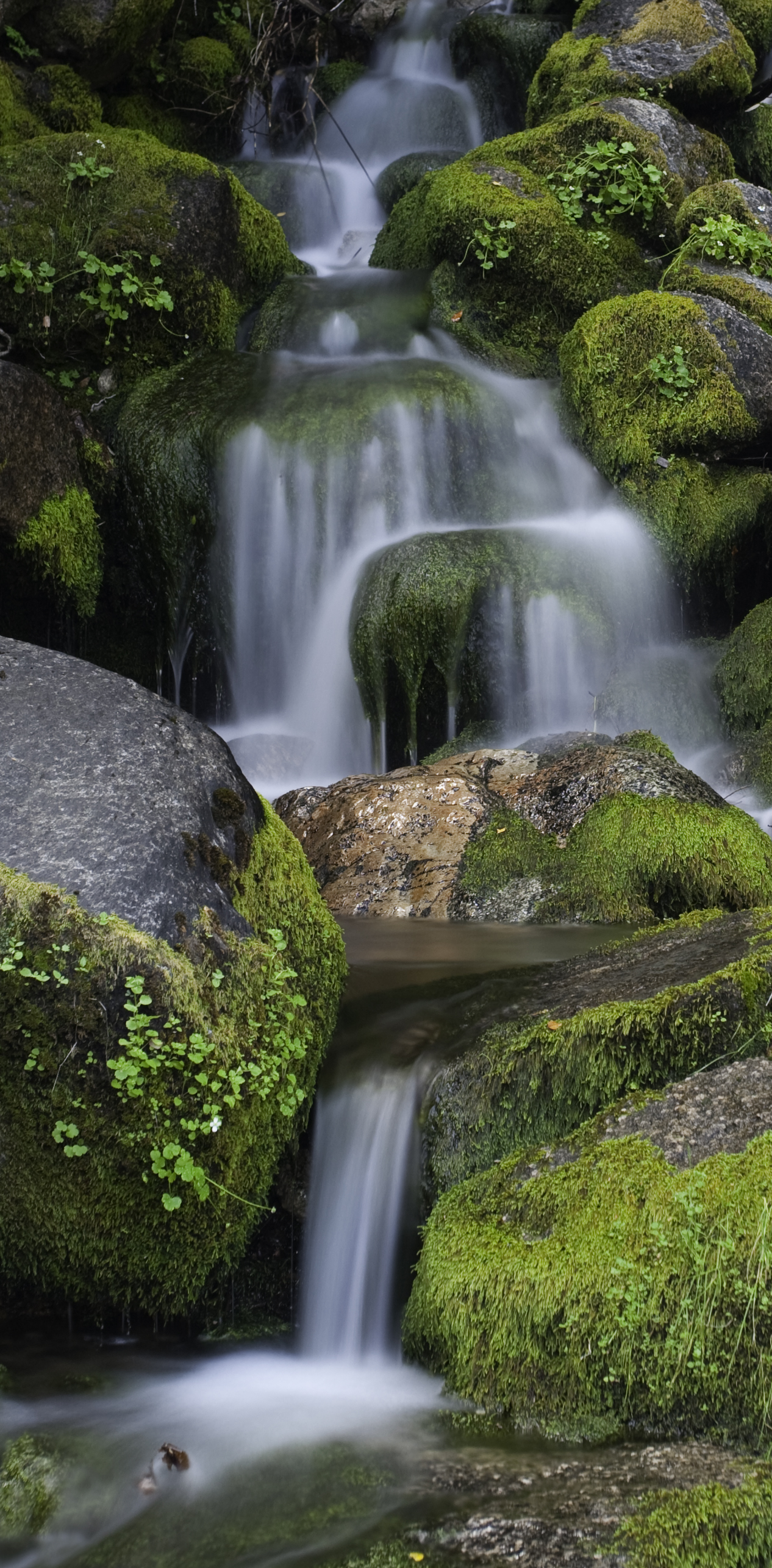 waterfall_moss_rocks_0114crop.jpg