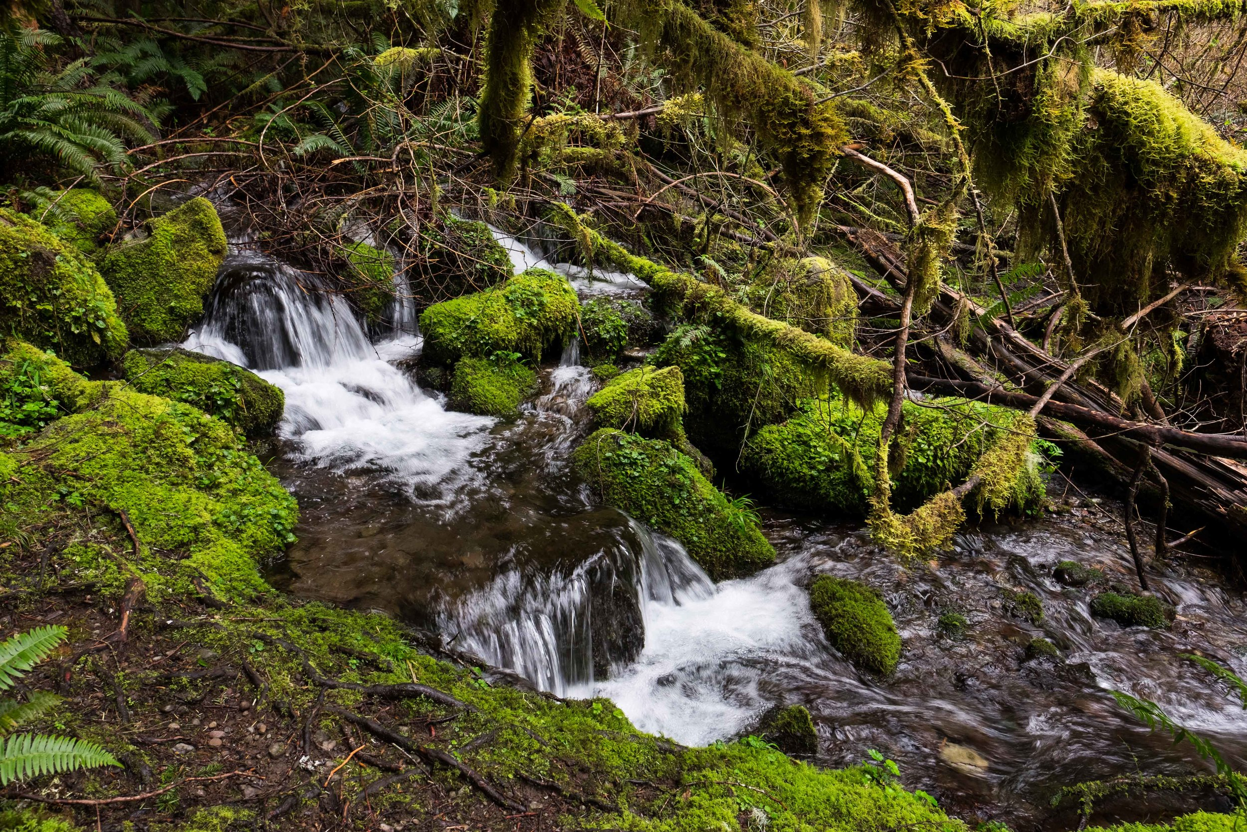 A small stream feeds into the Big Quilcene River.