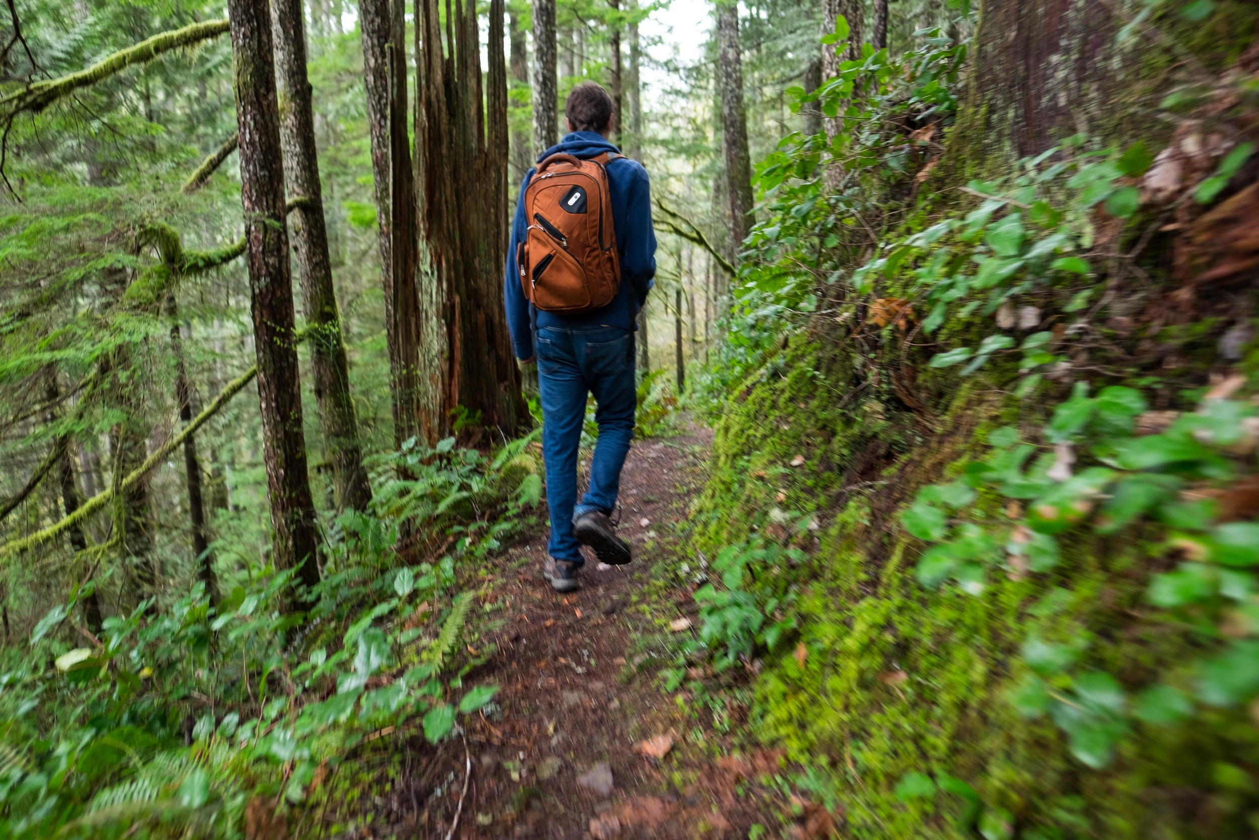Hiking on the Fallsview Canyon loop in the Olympic National Forest.
