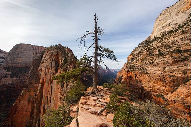 Four years ago I stood at this overlook and took in the natural beauty of Zion National Park. I was intrigued by this weather-beaten tree sitting atop a rock outcrop way above the valley floor and thought about the many storms it must have been through in its exposed environment. During a fast-moving trip, I relished the chance to slow down and rest with a view like this.