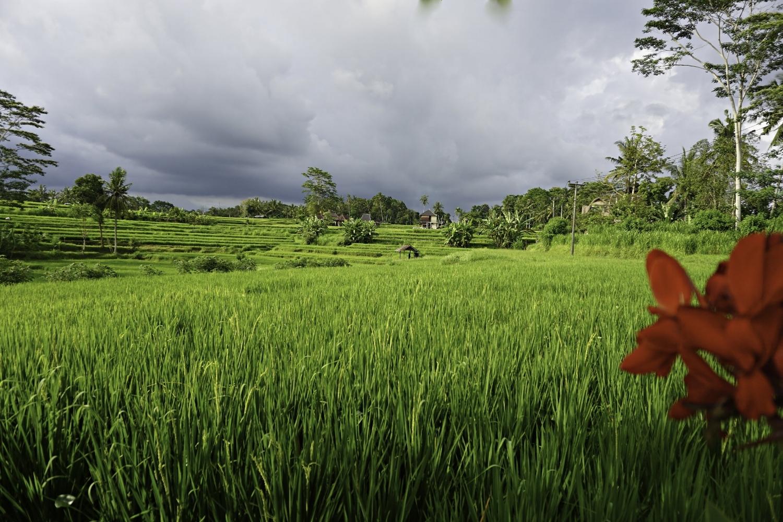 Ubud rice paddy view from Karsa Spa.jpg