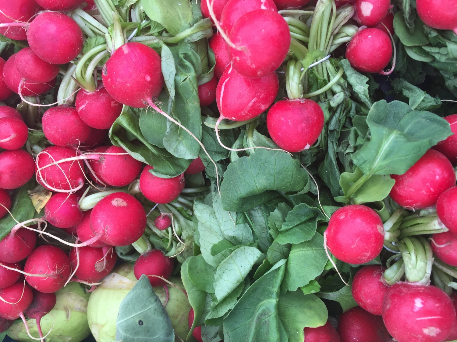 Radishes at the Albert Cuyp open air market in Amsterdam
