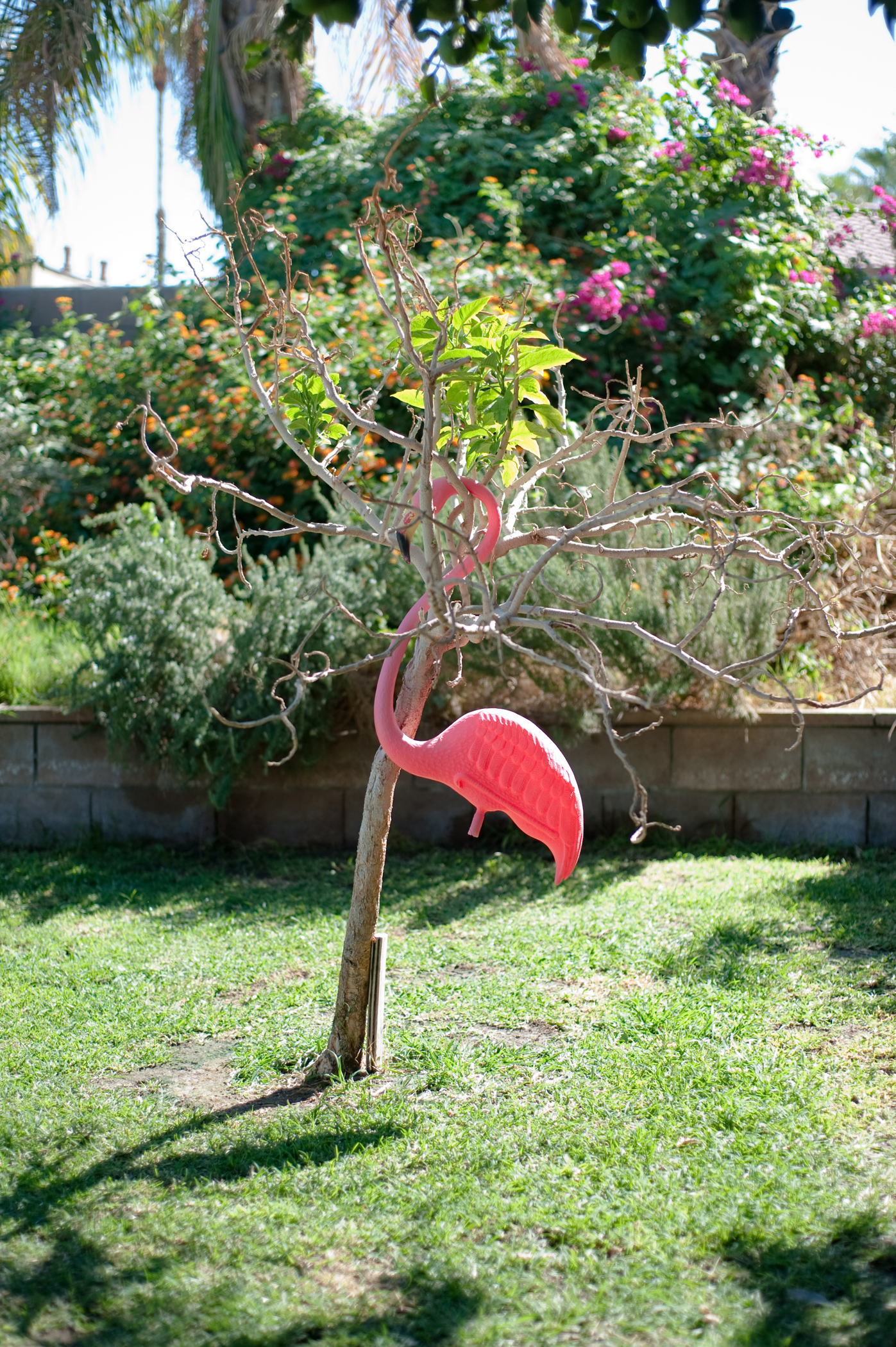 Flamingo   from the series   If you are lucky you get old