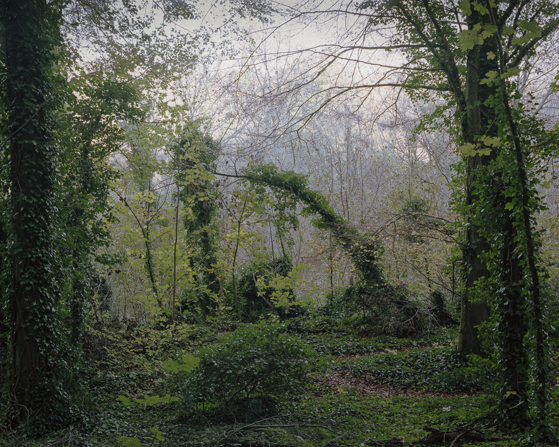 From the series  Photographs of Friston Forest