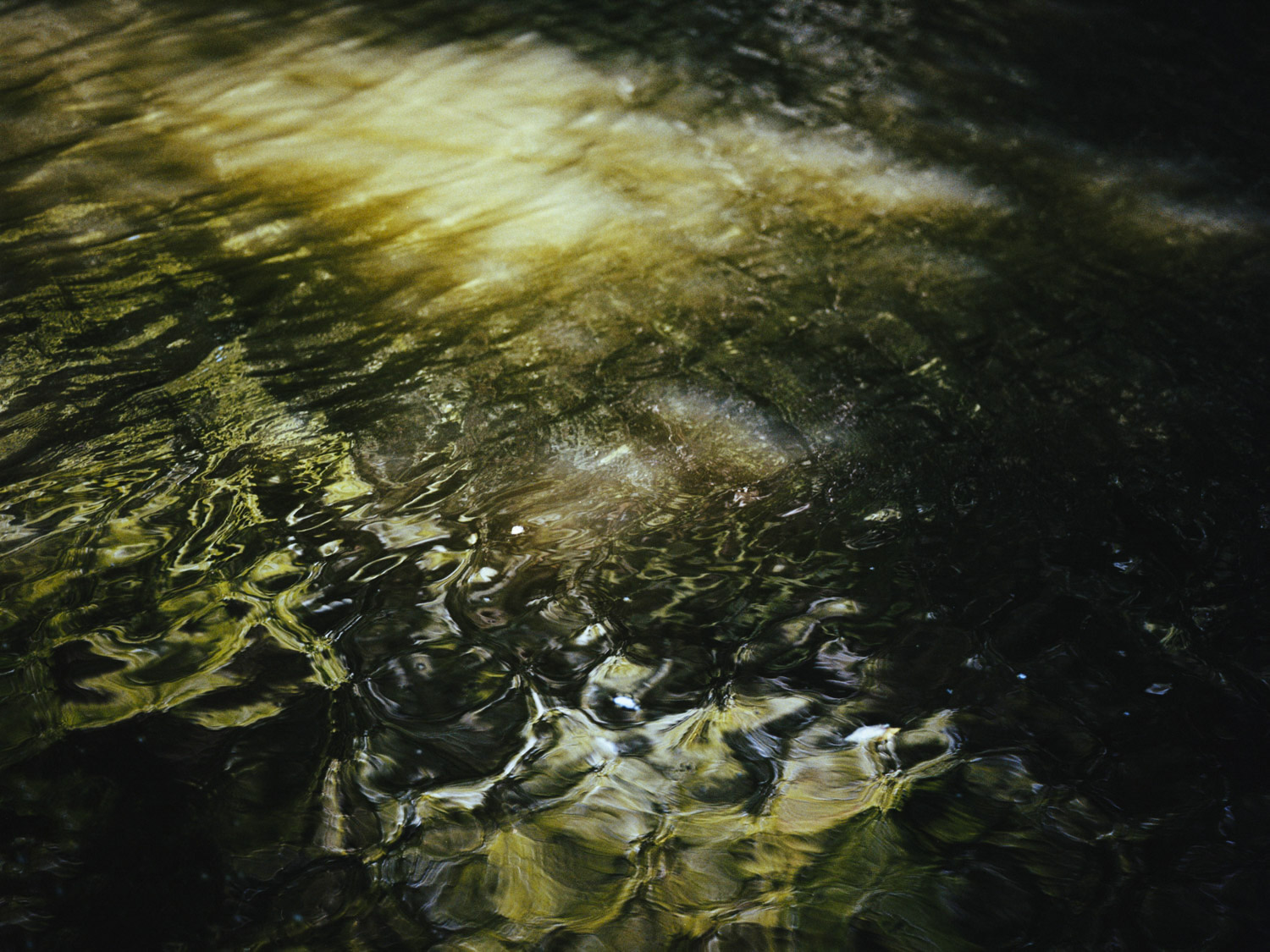 Image from the series  TEIFI  by Isabella Campbell