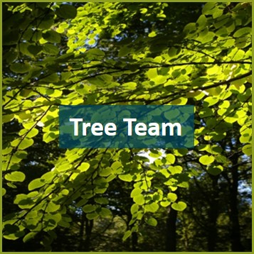 Tree team volunteer.jpg