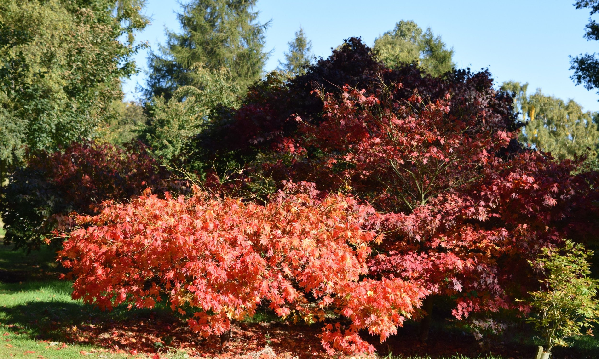 Glorious Autumn Colour at the Yorkshire Arboretum - October 2015