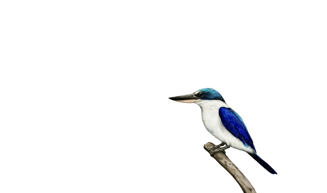 RC - Kingfisher.png