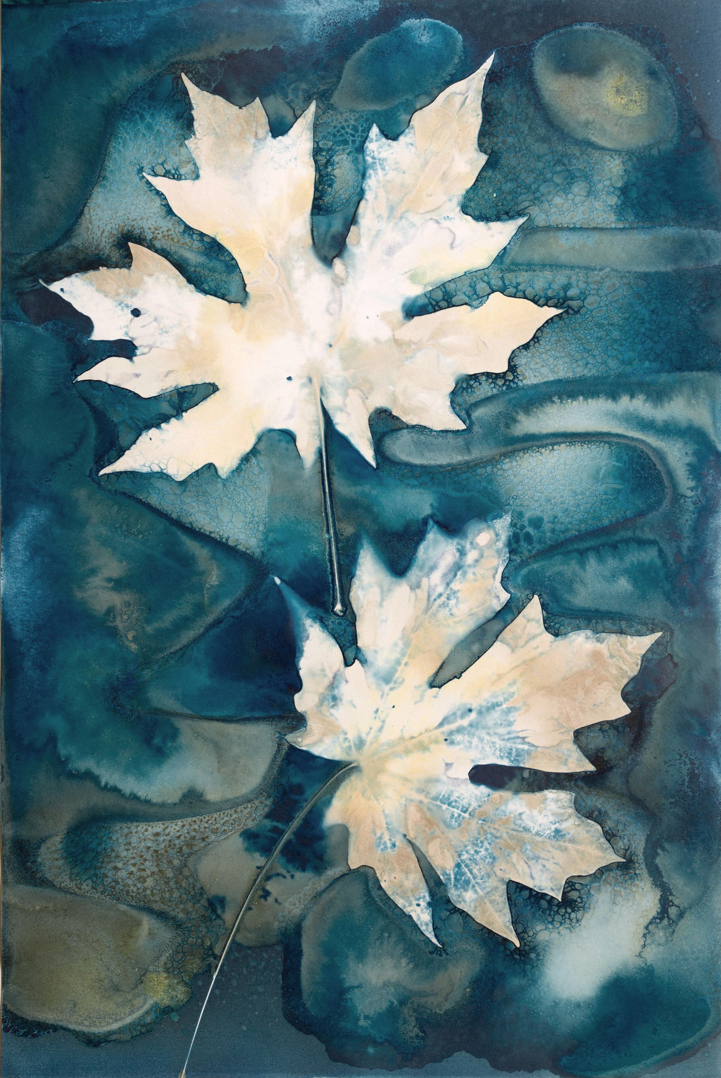 Sunlight Through the Leaves – Jill Welham Exhibition