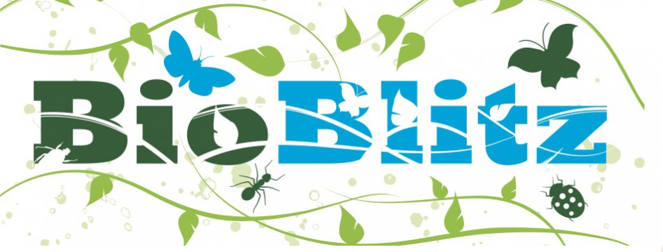 Inspiration: Bio Blitz. Place-based experience, interaction with experts and activities for kids and grown-ups, beginners and experts.