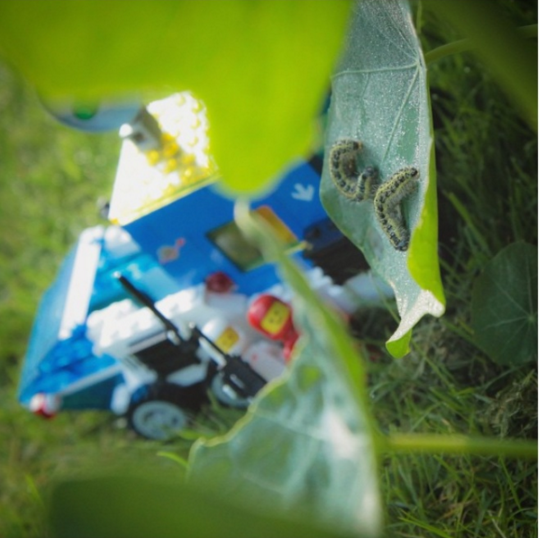 Idea: The Earthonauts.A photo series on Instagram following two lego people from outer space as they explore nature on Earth.