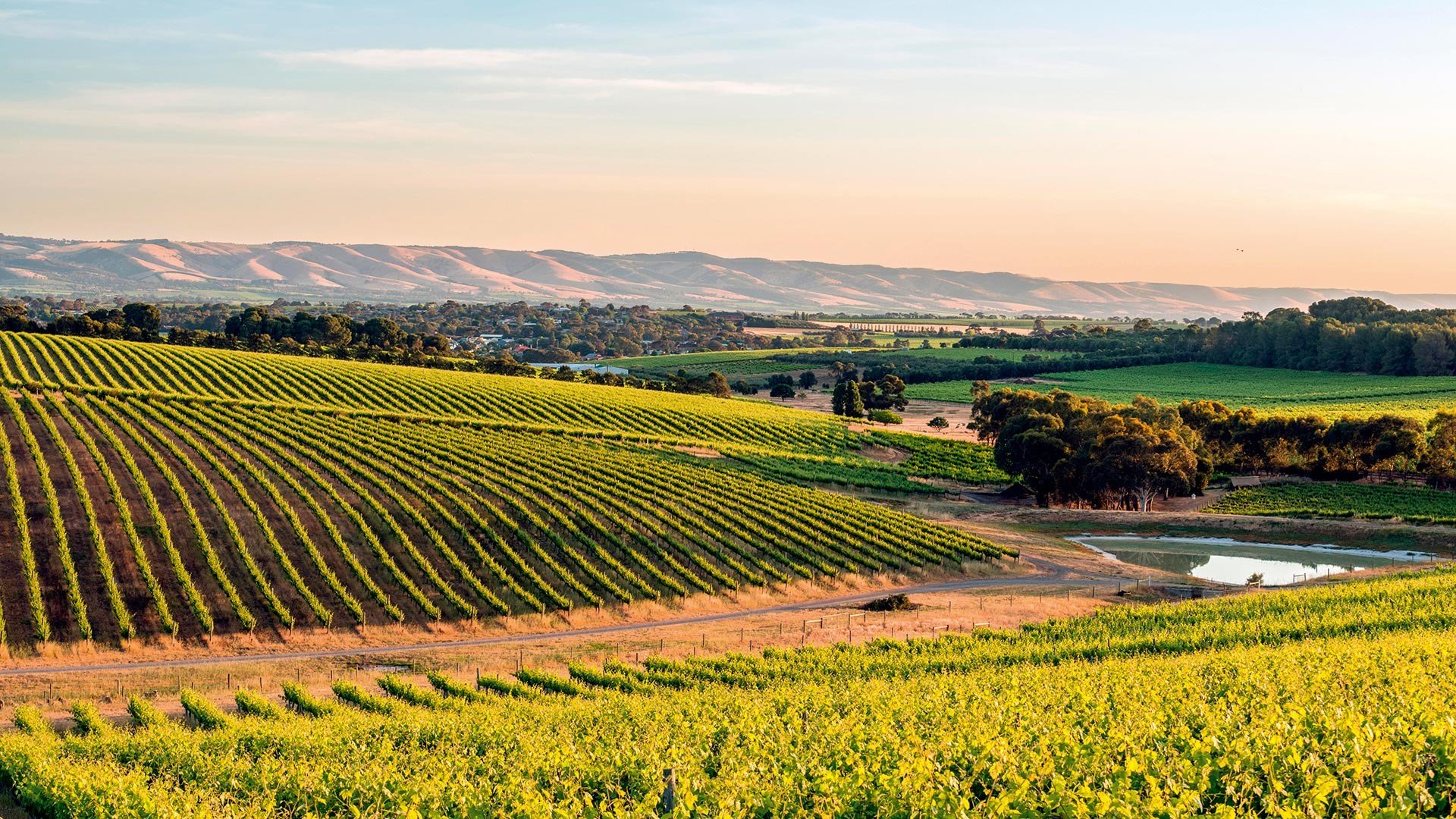 Foodism –  An exploration of South Australia's history and development as a wine region