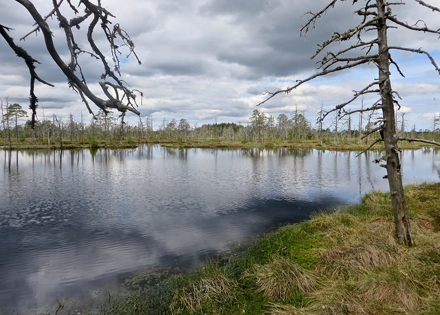 Are Estonia's Forests Under Threat? – The Ecologist, January 2018