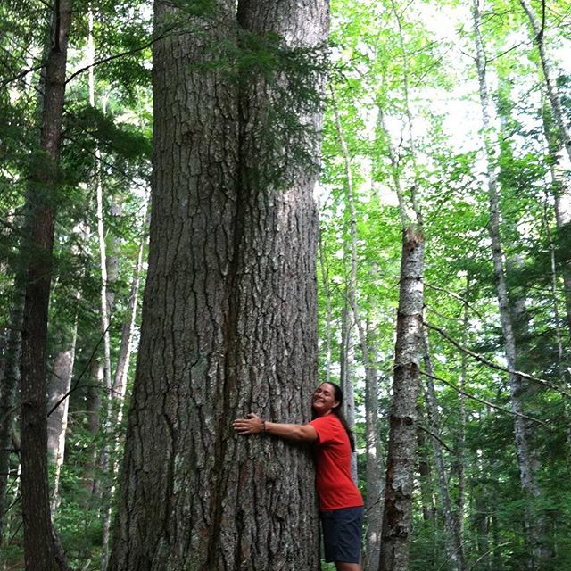 Happy Earth Day ~  I hope you get outside and do what you love today! Show someone you care about them. We are all creatures sharing the same home. - #wildinspirations #earthday #earthingwithjaclyn #treehugger #maineforest #mainetrees #lymesurvivor #lymeremission