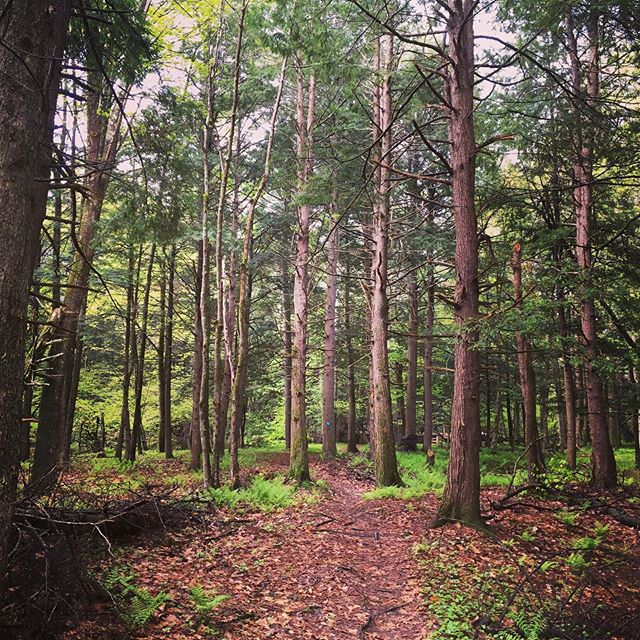 The forest is alive again! To run on slippery trails through the damp woods absorbing the energy of the freshly opened bright green leaves... Where we live is magic. I mean who created this hologram it's pretty fantastic and now to see the spirit beyond. - #wildinspirations #trailrun #maineforest #mainetrails #lymesurvivor #lymeremission #onmyrun #trees
