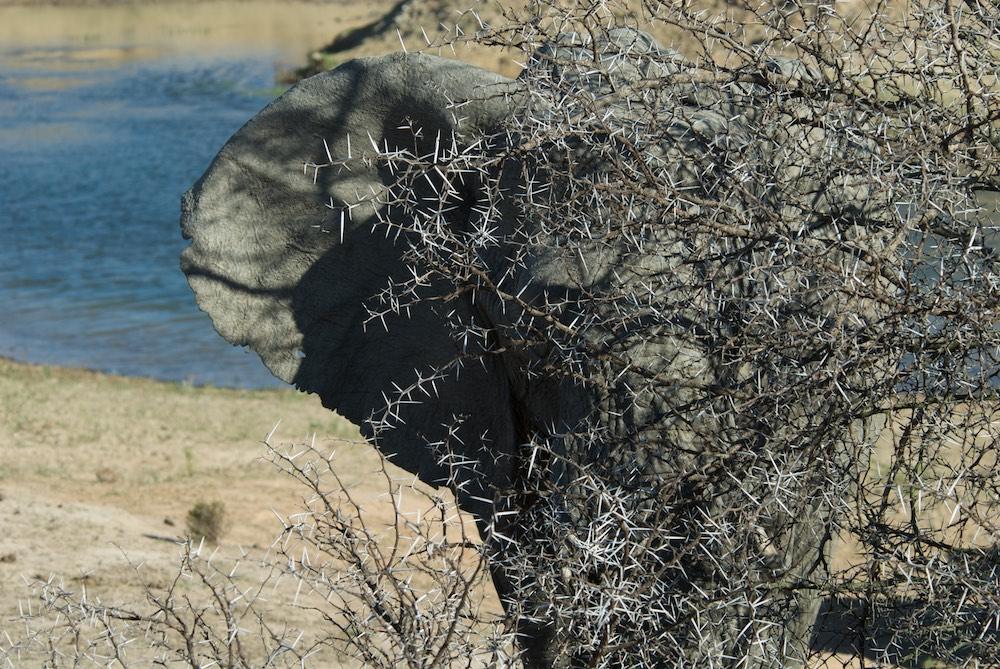 An African Encounter The Edge