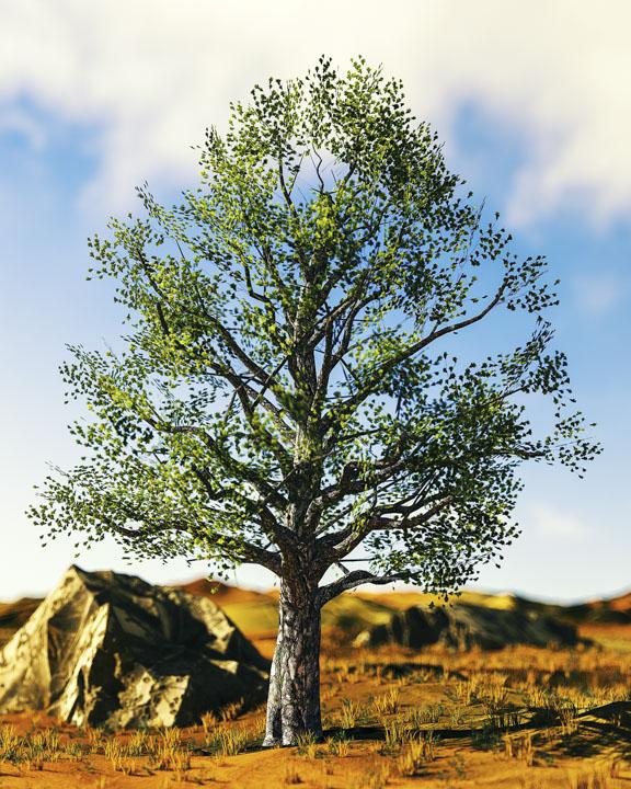 [01-02-18] - Tree