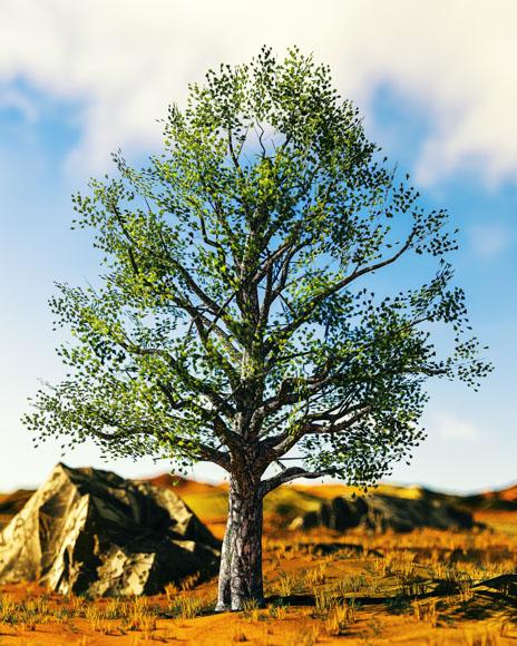 [01-02-18] - Tree.jpg