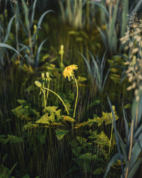 [18-09-17] - Grass.jpg