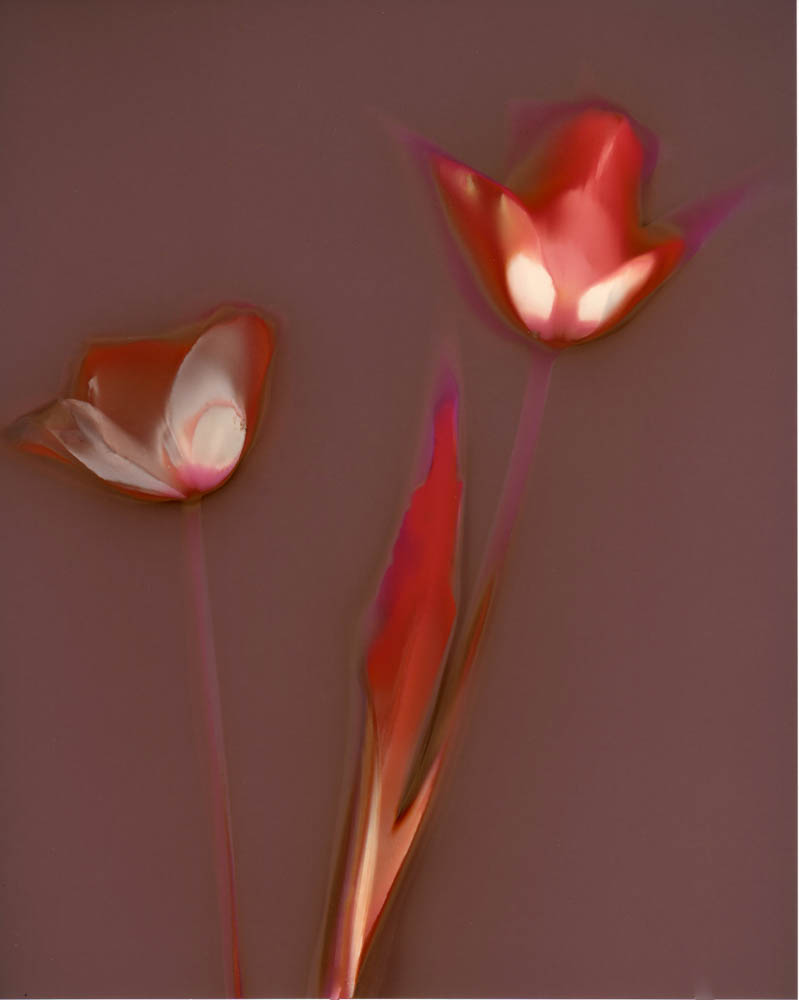 Edit Lumen Tulips.jpg