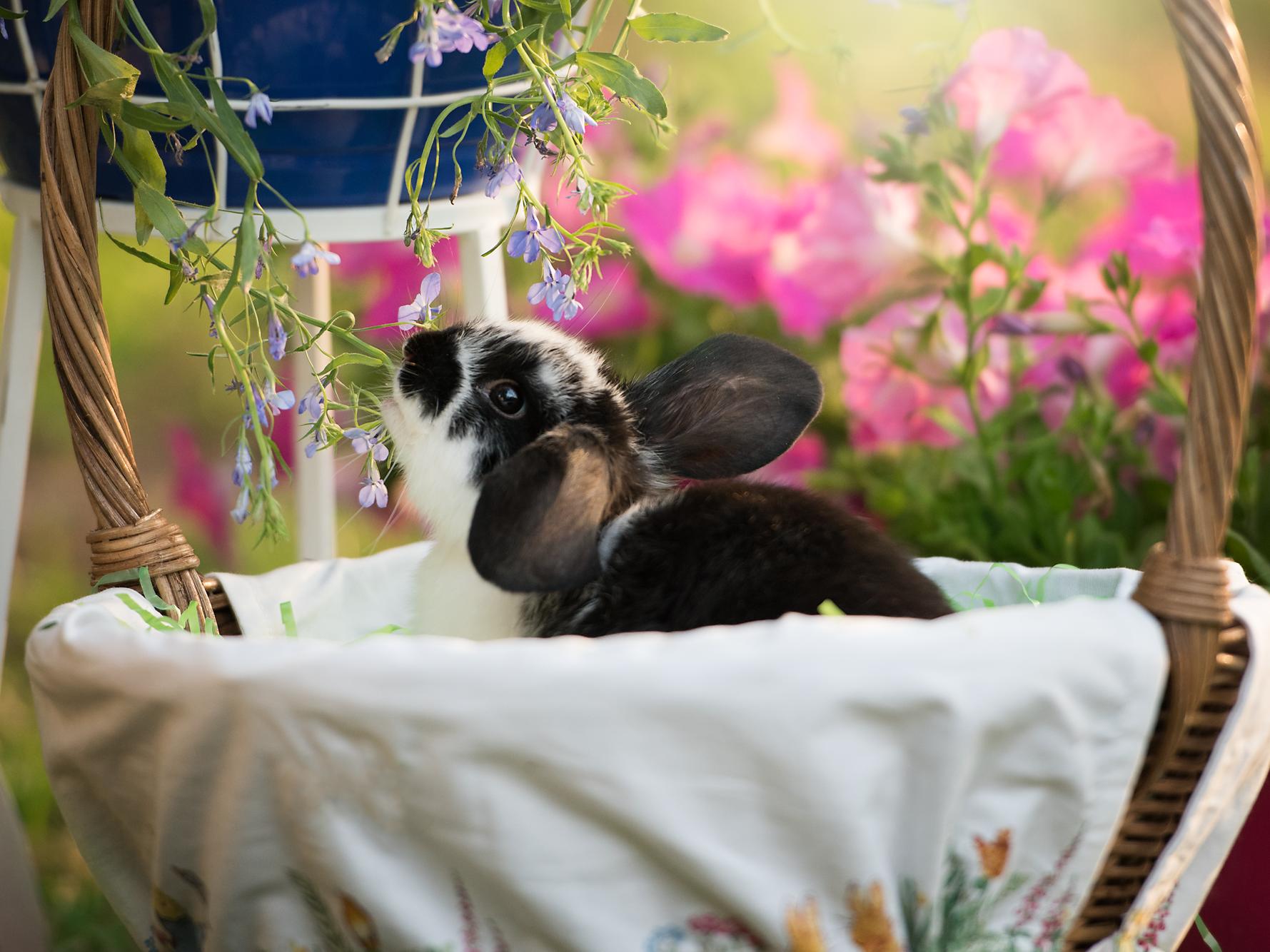 Oreo Bunny Rabbit